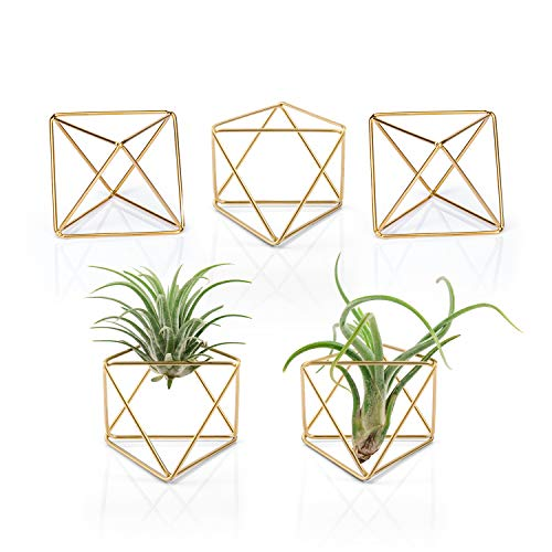 Mkono 5 Packs Air Plant Holder Modern Geometric Planter Tiny Metal Tillandsia Air Ferns Display Stand Mini Tabletop Himmeli Decor with Each Side 2.6″ Long for Home, Office and Wedding, Gold