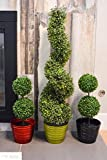 Admired By Nature 3' Artificial Boxwood Leave