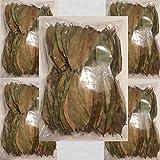 GUANABANA GRAVIOLA SOURSOP (1000)LEAVES,HOJAS1000 hojas super oferta