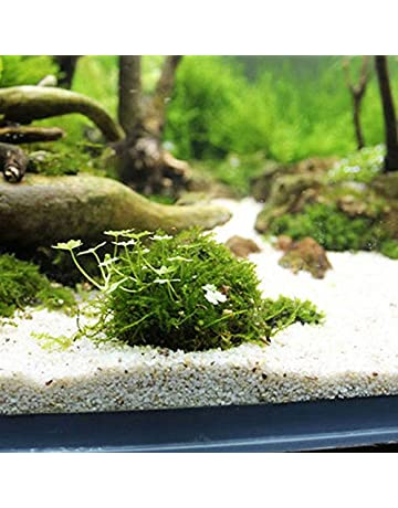 YMCHE Acuario Marimo Moss Ball Planta Viva Filtro Juguetes Naturales Cosecha sosteniblemente cosechada