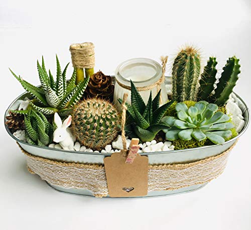 Handcrafted Tin - Handcrafted, Live Succulent Arrangement in Country-Laced Tin Pot with Scented Candle