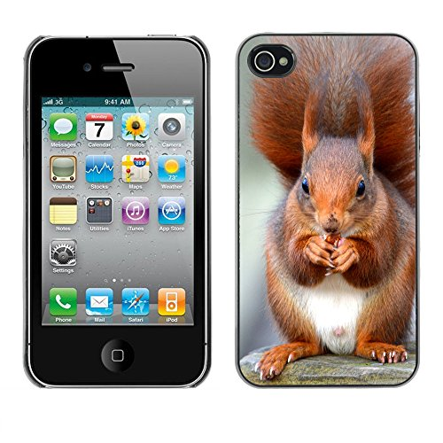 Premio Sottile Slim Cassa Custodia Case Cover Shell // F00013939 Red Squirrel // Apple iPhone 4 4S 4G