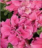 Fiore - Petunia - Double Pirouette Rosa - 30 Semi Pellettati