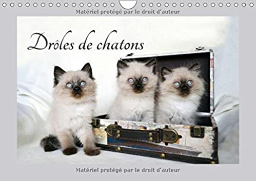 Droles De Chatons 2018: Ils Vous Donneront Le Sourire (Calvendo Animaux) (French Edition)