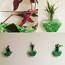 NewDreamWorld's Set of 6 empty hexagon glass wall terrarium//wall hanging fish bowl//indoor wall planters//rooting plant holder//room art wall decor (small)