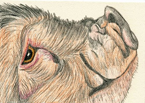 ACEO ATC Pot Belly Pig Original Drawing Farm Art-free shipping-Carla Smale by Carlas Pet Portraits