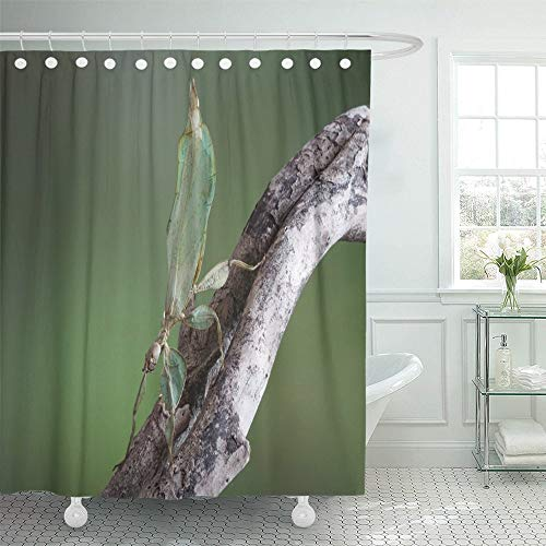 PAUSEBOLL Leaf Insect Phyllium Bioculatum Green Walking Leaves are Camouflaged to Take on The Shower Curtain Bathroom with Hooks,Mildew Resistant Waterproof Polyester Curtain
