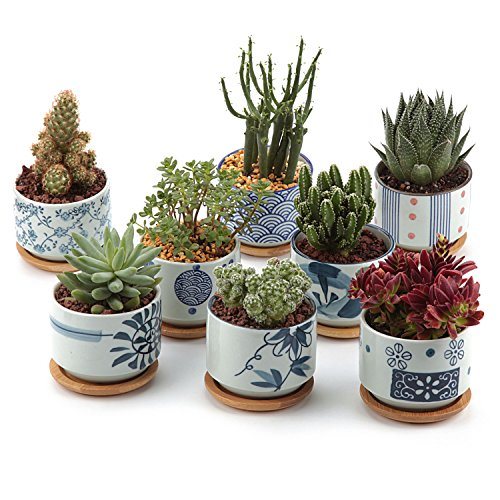 T4U 3 Inch Ceramic Japanese Style Serial Succulent Plant Pot Cactus Plant Pot Flower Pot Container Planter Full Colors Package 1 Pack of 8
