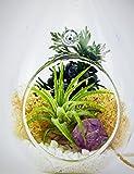 Bliss Gardens Mini Air Plant Terrarium Kit with Amethyst / Mini Shabby Chic Teardrop