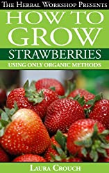 How to grow strawberries using only organic methods: Growing strawberries in containers or your garden