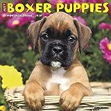 Just Boxer Puppies 2020 Wall Calendar (Dog Breed Calendar)