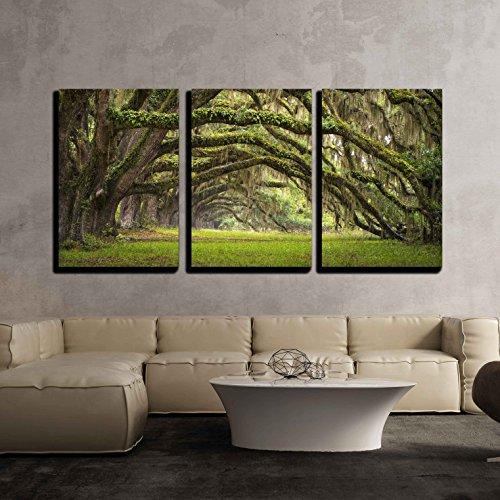 Oaks Avenue Charleston SC plantation Live Oak trees forest landscape x3 Panels