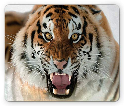 Safari Mouse Pad, The Siberian Tiger Roar Golden Yellow Eyes Attack Predator White Background, Standard Size Rectangle Non-Slip Rubber Mousepad, Amber White Black,8.66 x 7.08 x 0.118 Inches