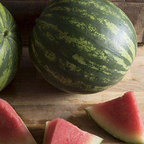 David's Garden Seeds Fruit Watermelon Farmer's Wonderful (Seedless) 9365SV (Red) 25 Non-GMO, Hybrid Seeds
