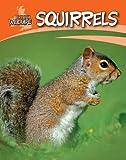 Squirrels (British Wildlife)