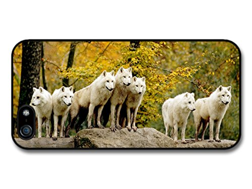 White Wolf Pack Waiting In the Yellow Forest coque pour iPhone 5 5S