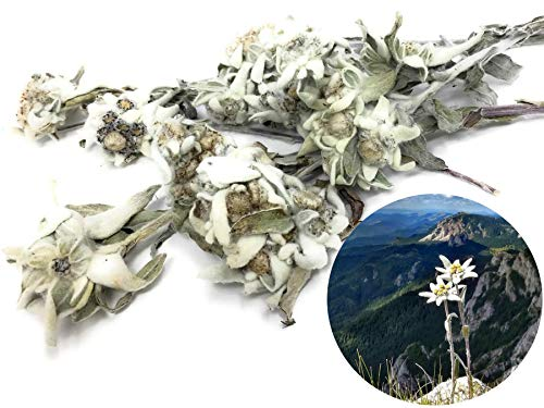 Edible Alpine Edelweiss Flowers - pure, rare, organic, culinary, original! For Tea, Sirup, Plate Decoration, edible Flower Sprinkles, Cosmetics, DIY Hydrosols, Soaps, Creams, Potpourri
