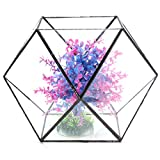 BuyYourWish Polygon Greenhouse Glass Terrarium DIY Micro Landscape Succulent Plants Flower Pot One Piece