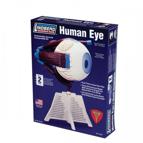 Lindberg Human Eye