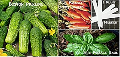 Boston Pickling Cucumber Seeds 420 Seeds Upc 646263361405 + 1 Plant Marker