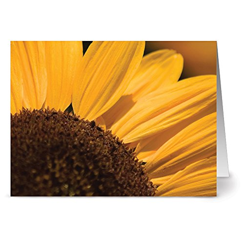 - You Are My Sunshine - Blank Cards - Yellow Envelopes Included (Sunshine Note)
