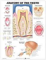 International Journal Of Orthodontics And