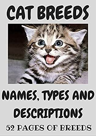 Cat names from movies and books