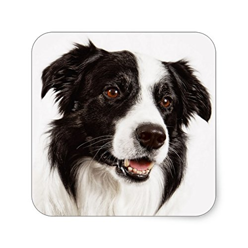 - Black And White Border Collie Puppy Dog Stickers - Sticker Graphic - Beware of Dog Lover Sticker Sign for Walls Windows Bumper Sticker Dog Sign Dog Lover Decor