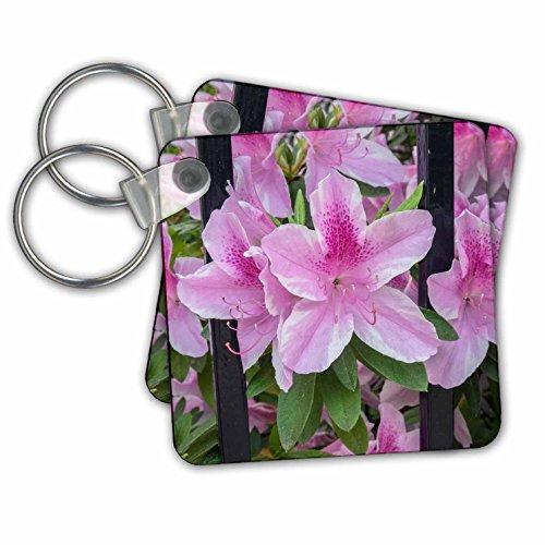 Danita Delimont - Flowers - Pink Azalea, wrought iron fence, Charleston, South Carolina, Usa - Key Chains - set of 4 Key Chains (Multi Chain Wrought Iron)