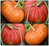 Best MySeeds.Co Pumpkin Seeds - 10 Cinderella (Rouge vif D'Espampes) Pumpkin seeds ~ Review