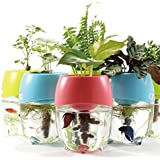 Dr. moss Aquaponic Fish Tank Aquarium for Betta Fish with Water Garden Planter Top Lid Natural Ecosystem for Plant Growth (Blue)