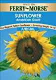 Ferry-Morse Sunflower American Giant Seeds (Annual)