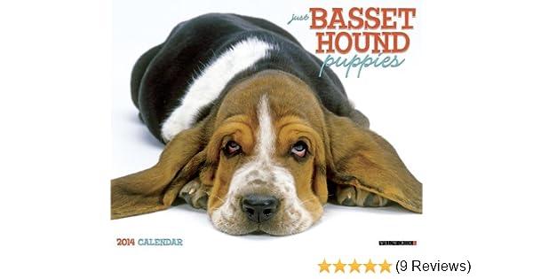 Just Basset Hound Puppies 2014 Wall Calendar Willow Creek Press