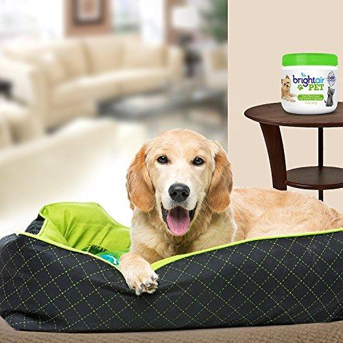 Buy air freshener for pet odor