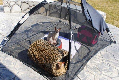 ABO Gear Happy Habitat for Indoor Cats. Tent Enclosure Portable Pens Amazon.co.uk Pet Supplies & ABO Gear Happy Habitat for Indoor Cats. Tent Enclosure Portable ...