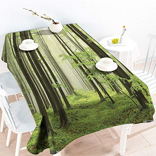 Rectangular Table Covers Spring Beech Forest Morning Haze in The Mountains of The Southern Polish PictureKitchen Dinning Party TableclothWhite Green Olive(70 by 90 Inch Oblong Rectangular)