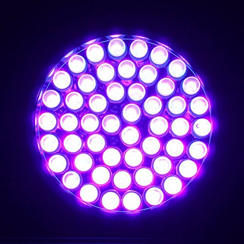 LOFTEK-51-UV-Ultraviolet-Flashlight-395-nM-LED-Handheld-Blacklight-Perfect-Urine-and-Bed-Bug-DetectorScorpion-Hunting-Light-3-AA-Batterynot-included