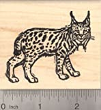 Bobcat Woodcut Style Rubber Stamp