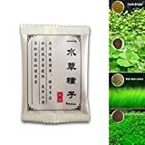 Misciu Plant Seeds Fish Tank Aquarium Aquatic Water Grass Decor Garden Foreground Plant (Lucky Clover)