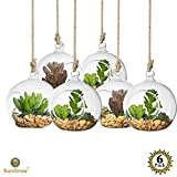 6 Pcs Air Plant Glass Orbs for Home Gardening --- Round, Heat-Resistant Glass - Make your Hanging Garden at home - For Air plant enthusiasts - Ideal for Open Terraria and DIY Projects