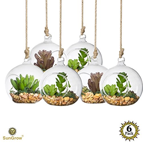 6 Pcs Air Plant Glass Orbs for Home Gardening --- Round, Heat-Resistant Glass - Make your Hanging Garden at home - For Air plant enthusiasts - Ideal for Open Terraria and DIY Projects (Little Girl Planter)