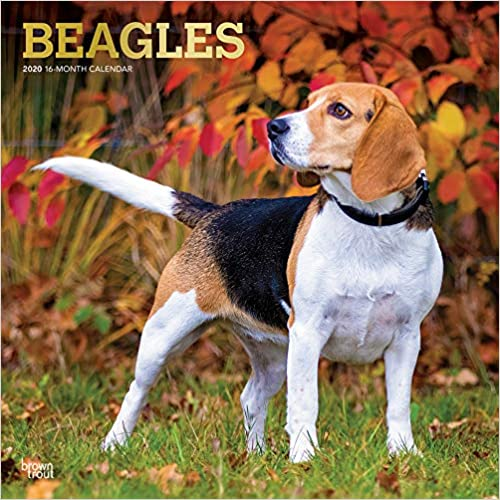 livre pdf gratuit télécharger Beagles 2020 Calendar: Foil Stamped Cover