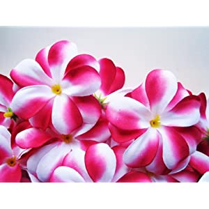 "(24) Red White Hawaiian Plumeria Frangipani Silk Flower Heads - 3"" - Artificial Flowers Head Fabric Floral Supplies Wholesale Lot for Wedding Flowers Accessories Make Bridal Hair Clips Headbands Dress 94"