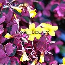 100pcs Bonsai Flower Seeds Oxalis Flowers Seeds Rare Flores For Garden Home Planting Sementes Raras De Verduras