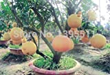 buy New Arrival!!! 20/bag Hardy Mini Pummello Pomelo Pomello tree Dwarf kao Pan Grape fruit! Rare Bonsai Fruit seeds for home garden now, new 2018-2017 bestseller, review and Photo, best price $2.39