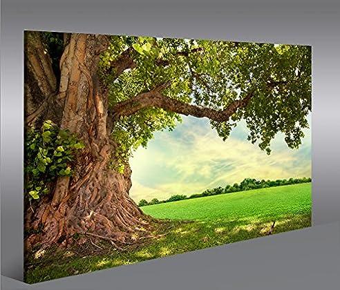 Bild Bilder Auf Leinwand Alter Baum Landschaft Natur Grün 1P Xxl