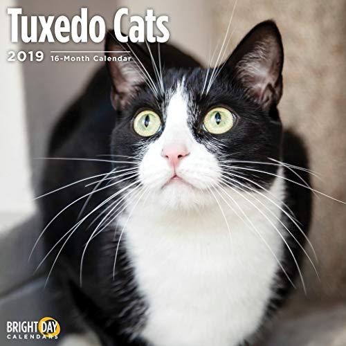 Tuxedo Cats 2019 16 Month Wall Calendar 12 x 12 Inches ()