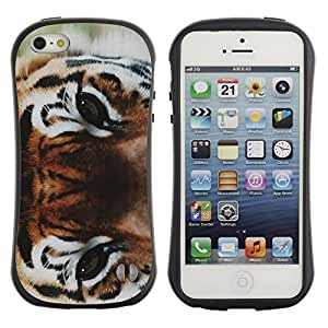 Suave TPU GEL Carcasa Funda Silicona Blando Estuche Caso de protección (para) Apple Iphone 5 / 5S / CECELL Phone case / / Eyes Wild Cat Forest Big /