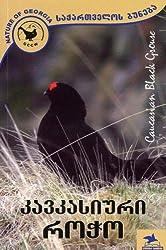 Caucasian Black Grouse