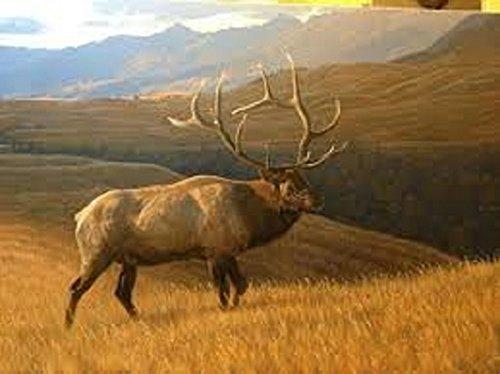 Royal Plush Raschel Throw Elk in the Field 50 in x 60 in B0164WLU4C